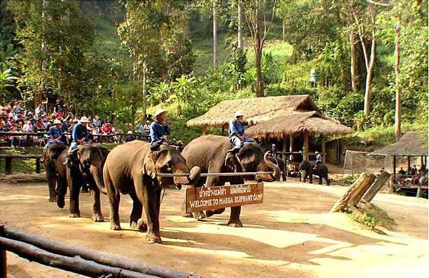 Elephant Camp, Mae  Sa