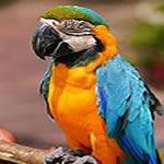 Courtesy of Phuket Zoo