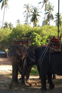 The National Animal, Elephant