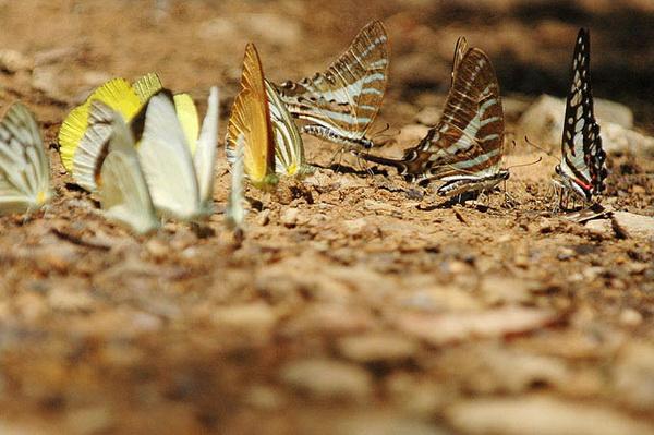 Butterflies-watching