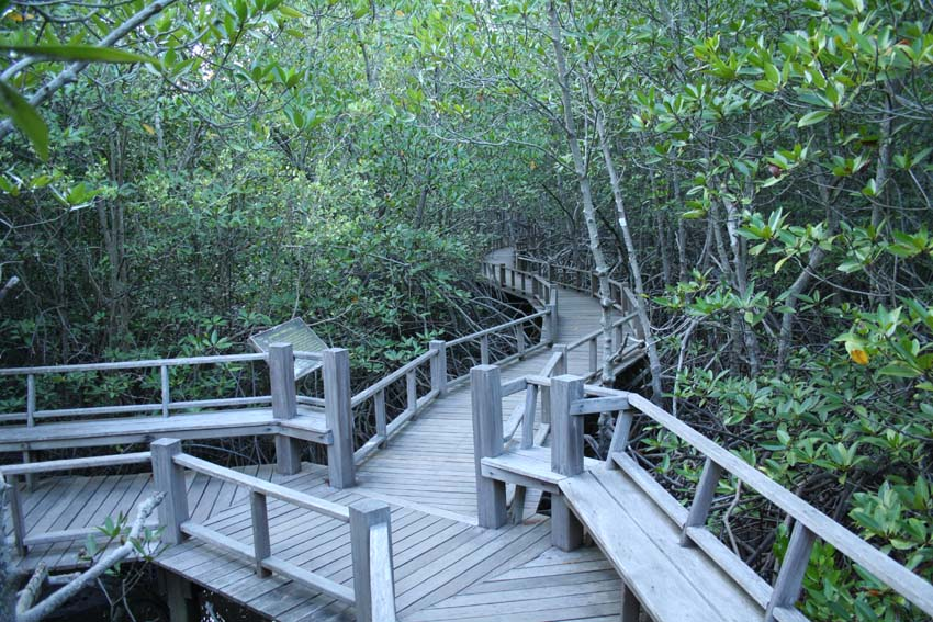 Pran Buri Forest Park